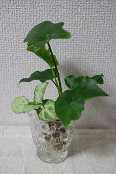ミニ観葉植物.jpg