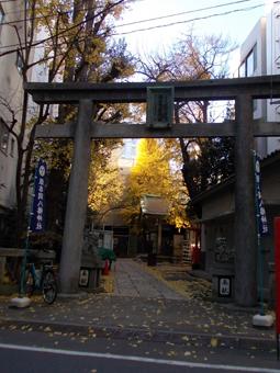 銀杏岡八幡神社の銀杏.jpg
